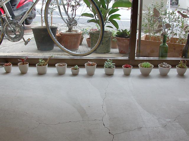 整列する桃井さんの器たち