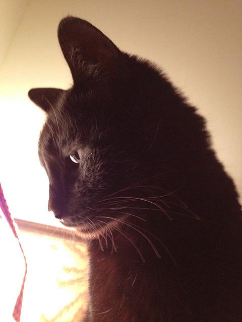 黒猫 キリ