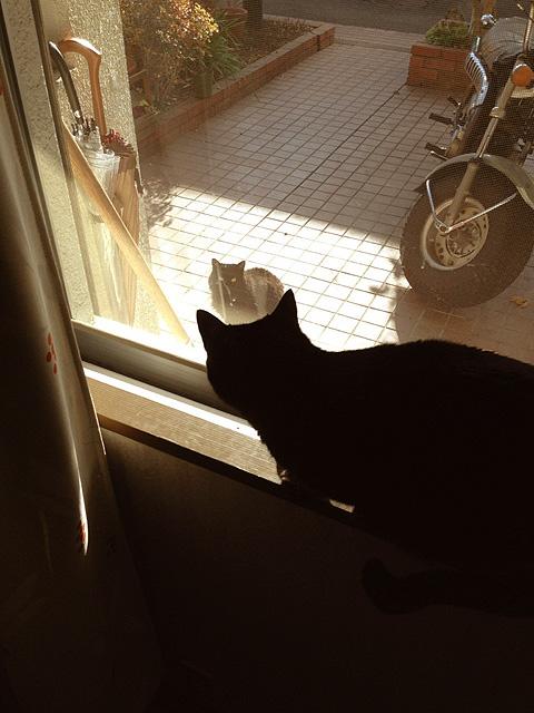 黒猫 キリとクロ