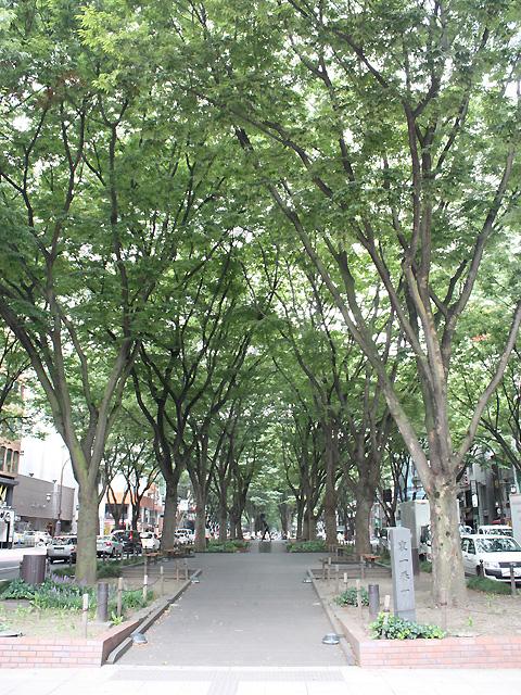 定禅寺通り 2