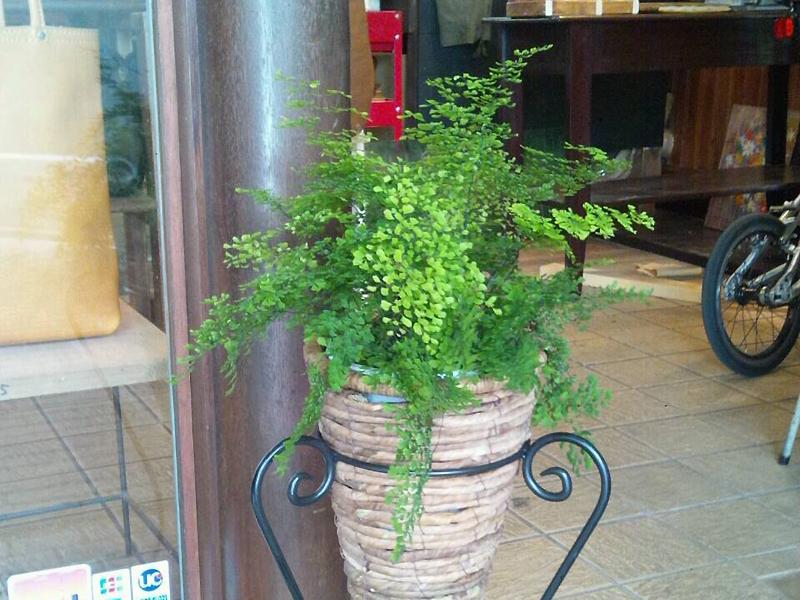 玄関のグリーン