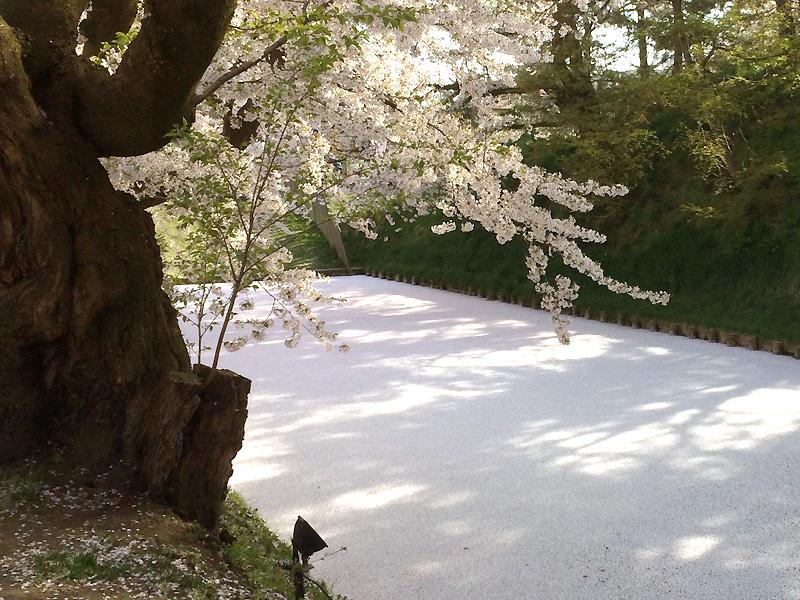 弘前公園 花いかだ