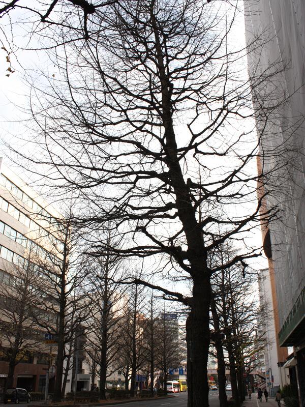 1寒い仙台
