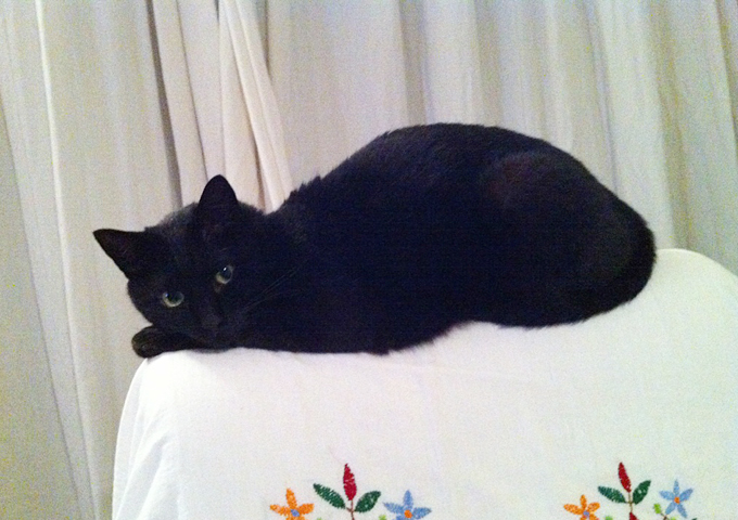 スタッフ愛用品:普段使いのミニボストン 作り手:板橋の愛猫キリくん