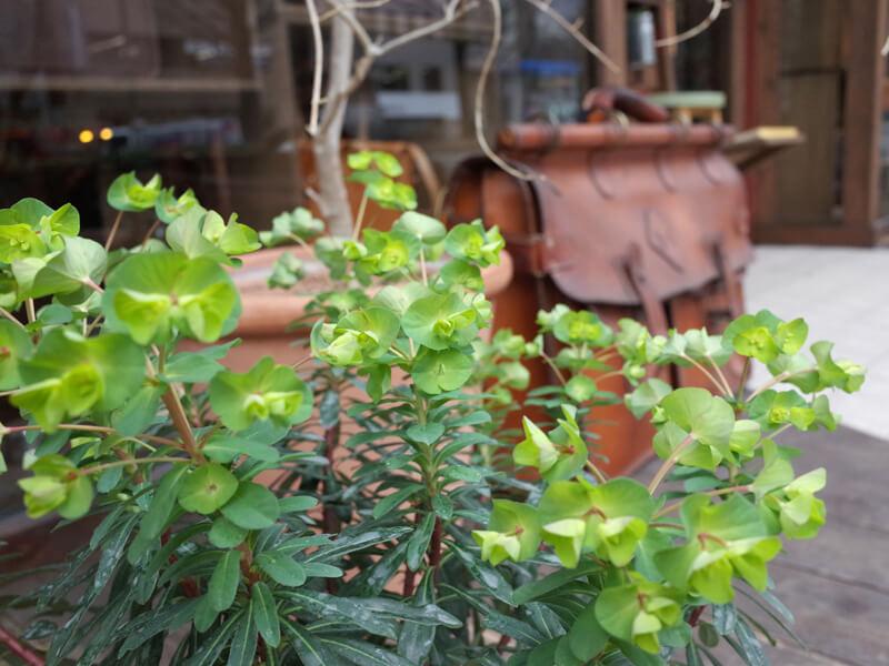 店先の植物1