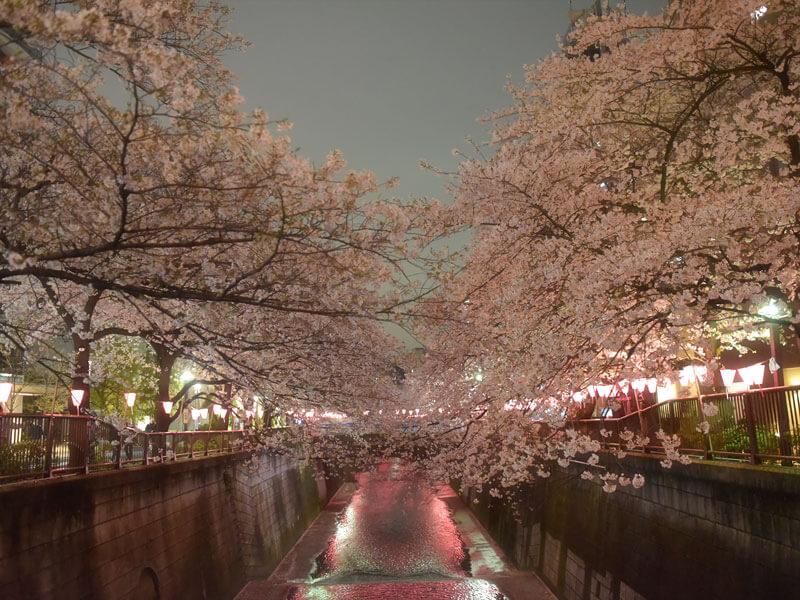 目黒川夜桜ウォーキング