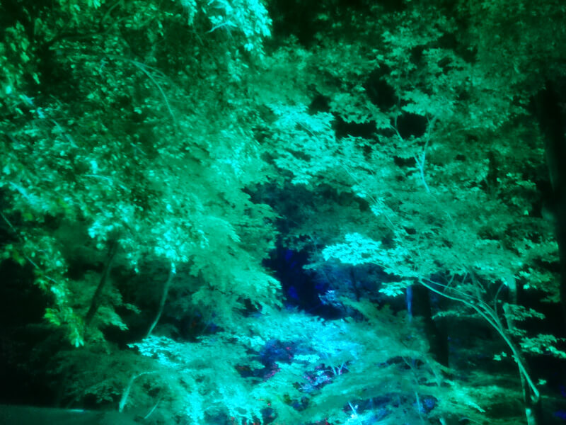 下鴨神社のイルミネーション1
