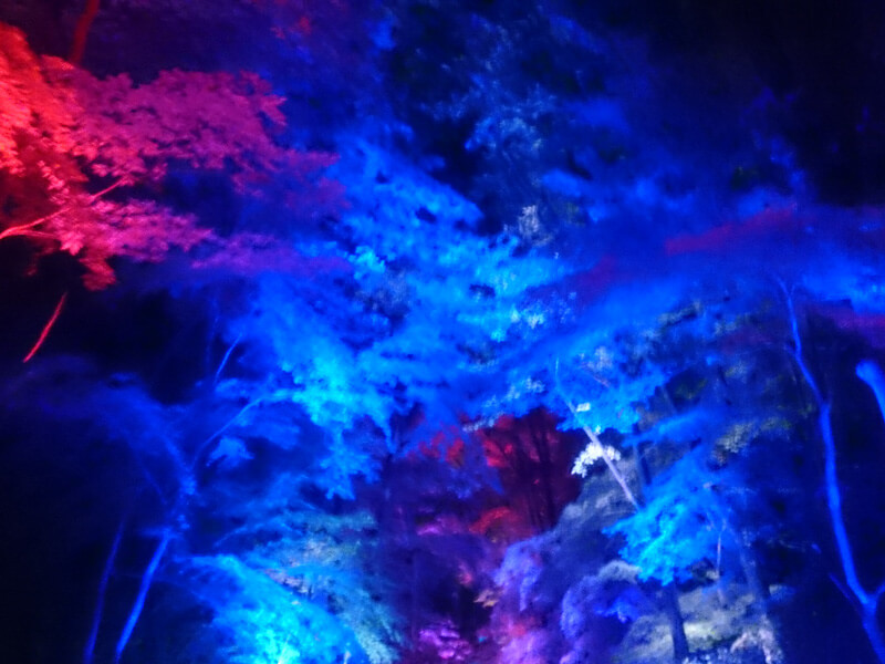 下鴨神社のイルミネーション2