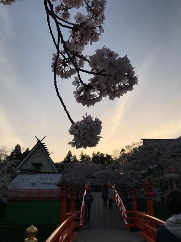 御嶽山 桜