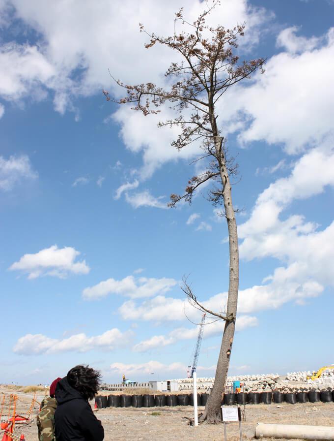 2015年、鹿島の一本松