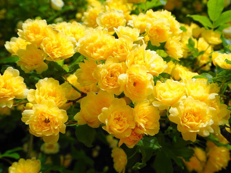 鶴見緑地公園 花