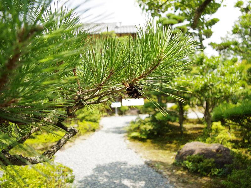 明治村の庭園