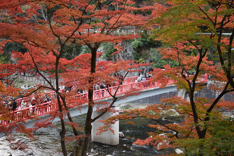 香嵐渓の紅葉4