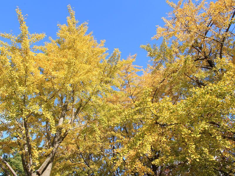 福岡の紅葉