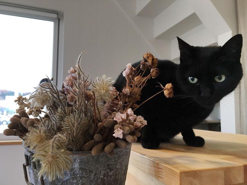 黒猫のキリ君