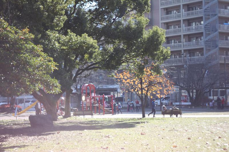 近所の公園1