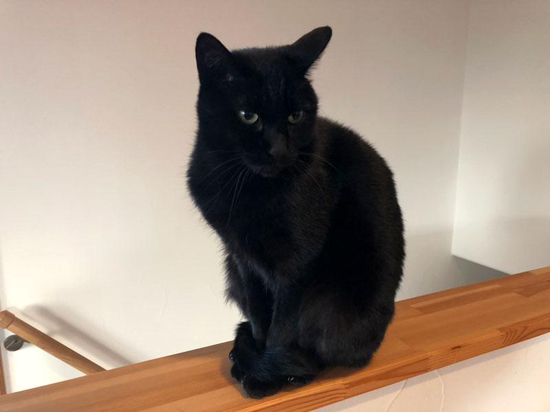 黒猫キリ君