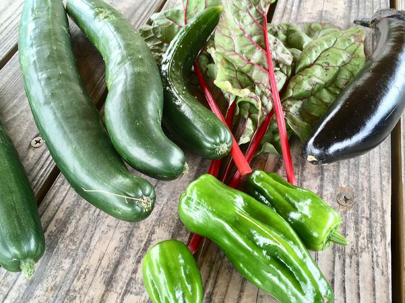 家庭菜園で採れた野菜たち