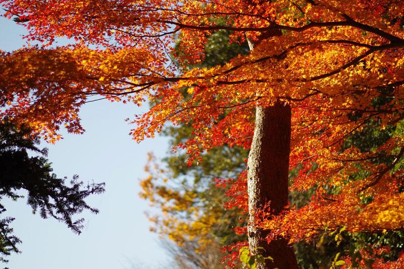 高尾山へ紅葉狩り1