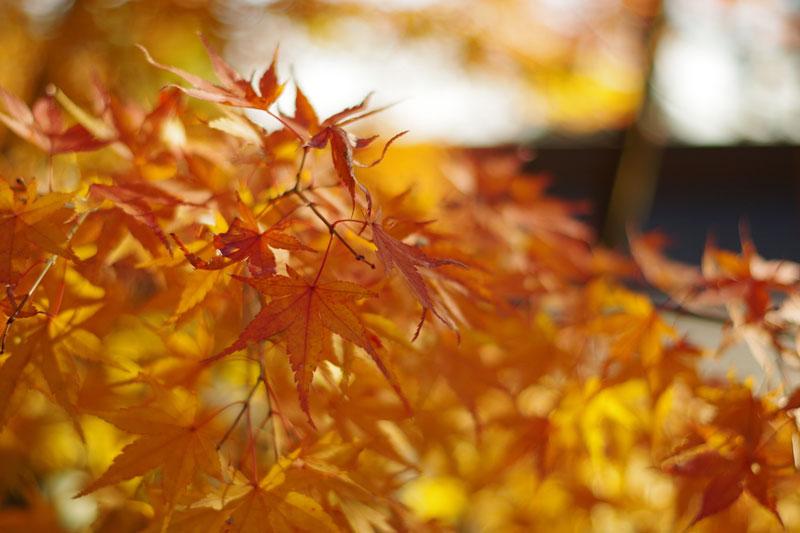 高尾山へ紅葉狩り2