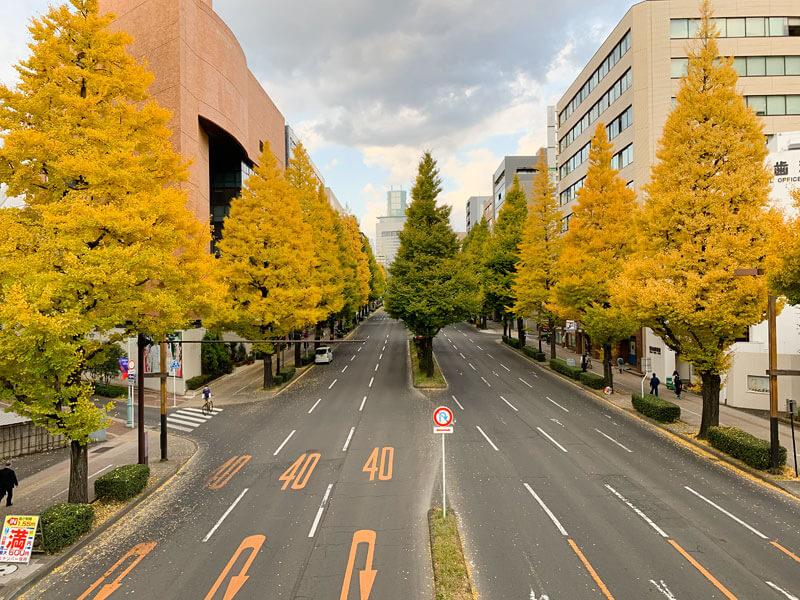 仙台店通りのイチョウ並木