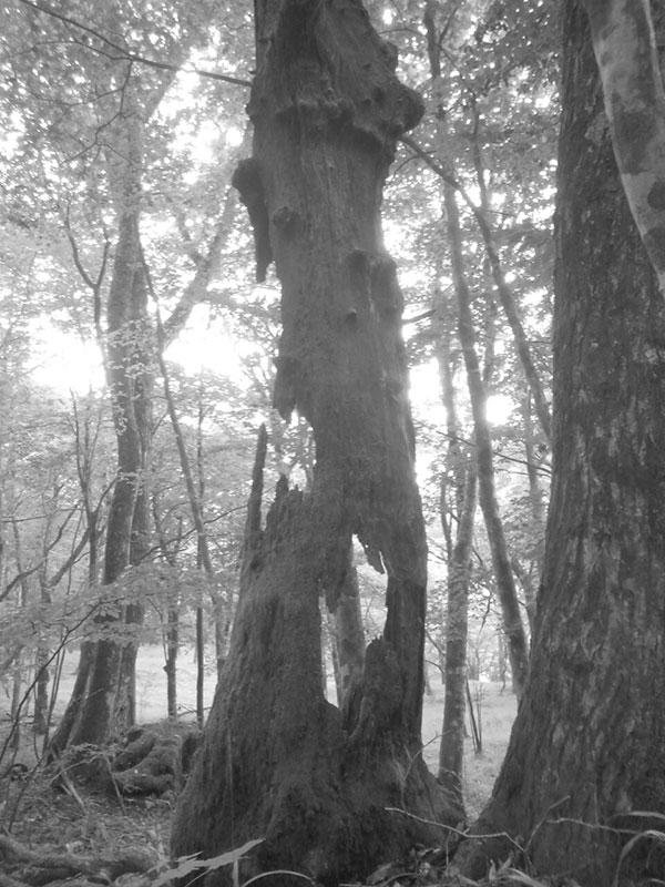 福田が訪れたキャンプ場近くの森1