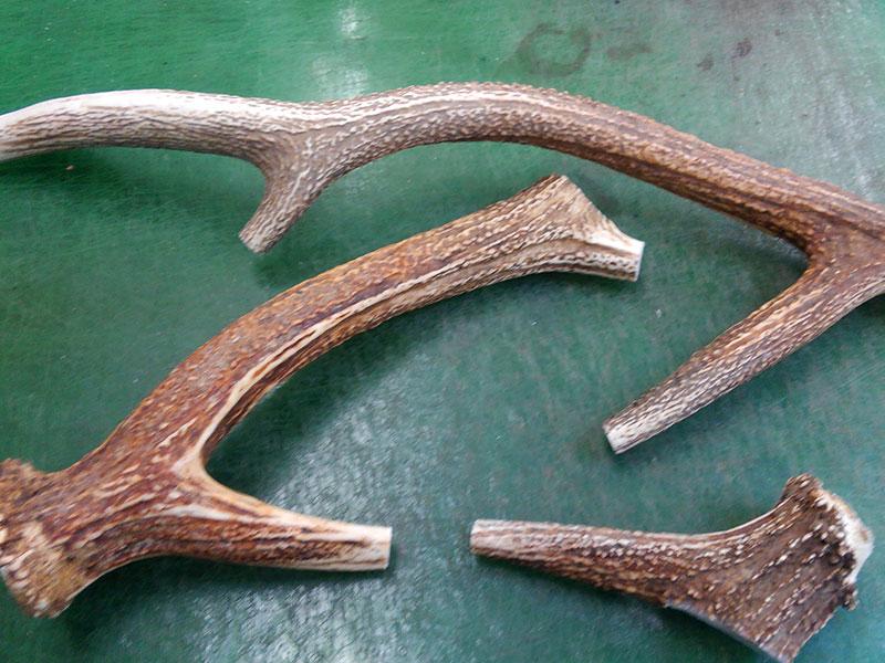 メッセンジャーバッグ(W-3)で使用している鹿角を切り出す前の様子