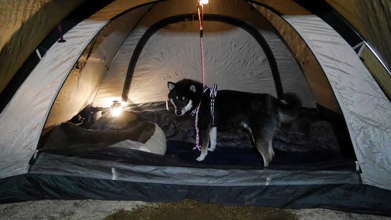 カイ君とテントで過ごす2